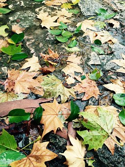 Autumn, Leaves, Forest, Golden Autumn, Sheet In Water