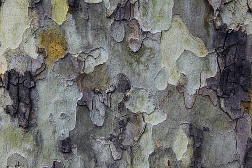 Tree, Background, Texture, Colors, Natural, Wood Tissue