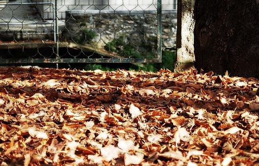 Camprodom, Girona, Autumn, Leaves, Park, Walk