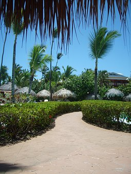 Carribean, Dominican Republic, Holiday, Path, Flowers