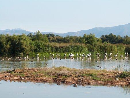 Birds, Wetland, Empordà, Girona, Gerona, Stork