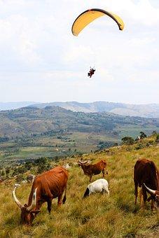 Cow, Burundi, Paragliding, Nature, Hills, Panorama