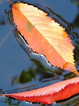 Leaves, Water, Autumn, Sheet In The Water, Red, Blue