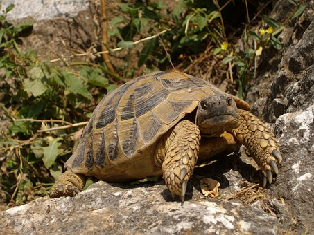 Turtle, Rocks, Nature, Animal, Reptile