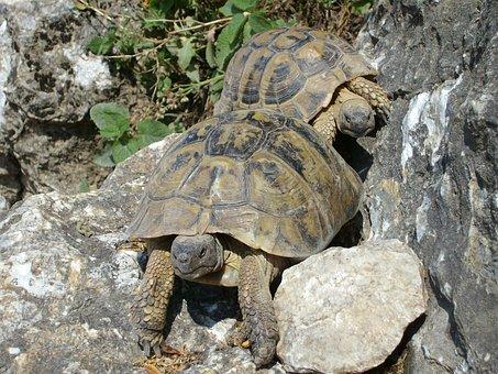 Turtles, Rocks, Nature, Animal, Reptiles