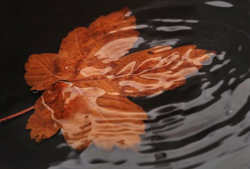 Leaf In The Water, Sheet In The Water, Wave
