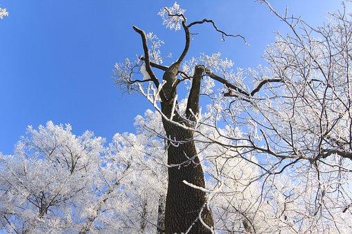 Winter, Tree, The Palace Ensemble Tsarskoe Selo, Snow