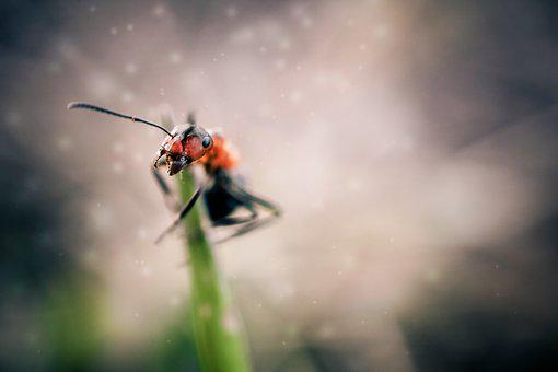 Ant, Insects, Macro, Animal, White, Wild, Wildlife