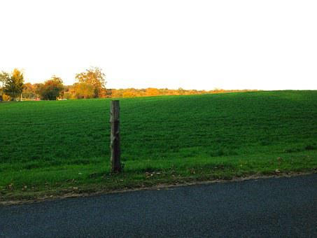 Meadow, Green, Nature, Grass, Field, Fall, Autumn