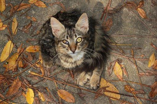 Curious, Looks, Cat, Backyard, Tabby, Squint, Eye, Ill