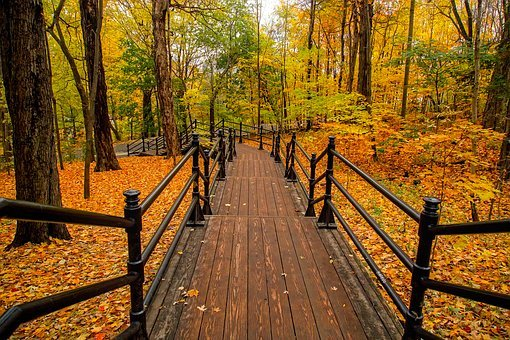 Canada, Fall, Autumn, Colors, Colorful, Forest, Trees