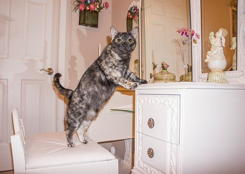 Cat, Feline, Tortie, Cute, Domestic, Kitty, Pet, Funny