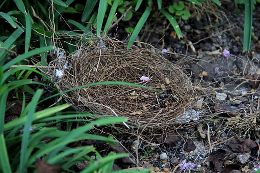 Nest, Bird, Empty, Sticks, Nature, Small, Fragile