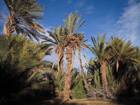 Morocco, Sahara, Travel, Maghreb, Palm Trees
