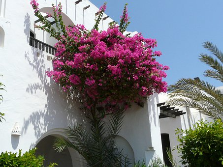 Blumenstock, Pink, Flowers, White Wall, Palm Trees