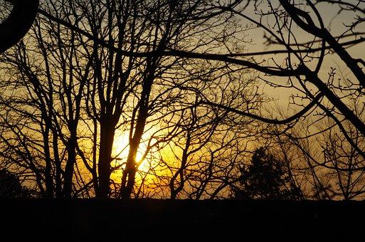 Trees, Branches, Aesthetic, Sun, Sunrise, Autumn, Sky