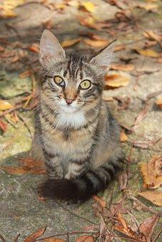 Cat, Backyard, Tabby, Squint, Eye, Ill, Pet