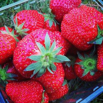 Strawberries, Red, Tasty, Food, Healthy, Fruit, Fresh
