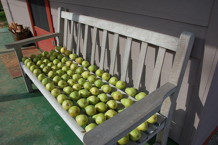 Pears, Pears On Bench, Fruit, Green Pears, Fall