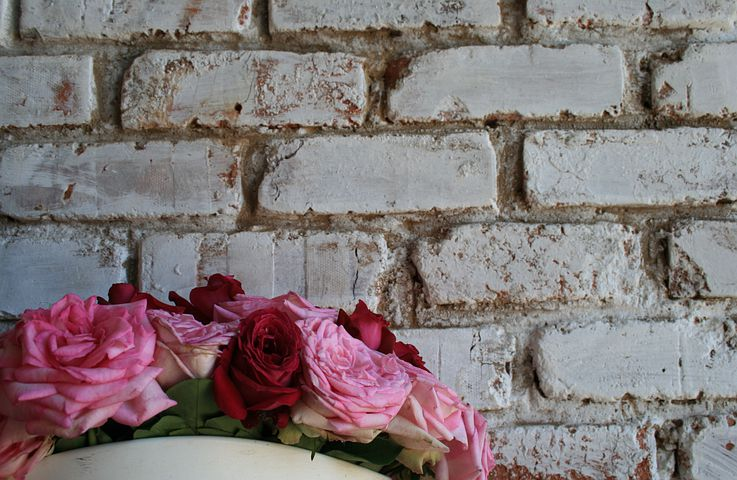 Wall, White, Brick, Roses, Pinks, Red, Blooms, Open