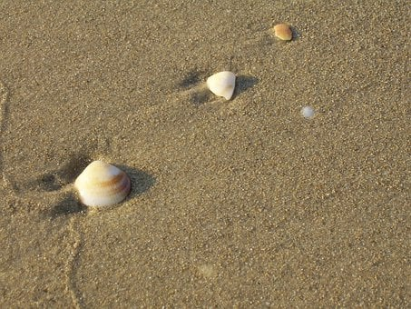 Seashells, Beach, Tropical, Nature, Vacation, Sand