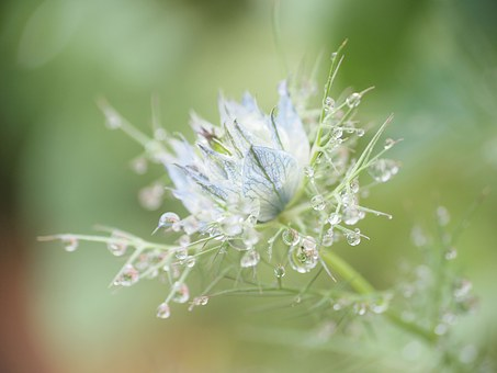 Flowers, After The Rain, Sensation Of Coolness, Cool