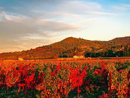 France, Vineyard, Mountains, Vine, Agriculture, Fall