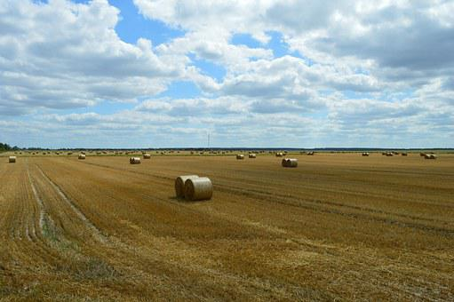Wheat, Field, Agriculture, Harvesting, Straw, Bale
