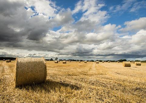 Hay, Field, Autumn, Farm, Agriculture, Nature, Straw