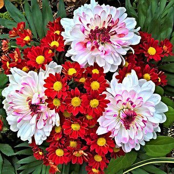 Flowers, Autumn Bouquet, White, Chrysanthemums