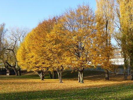 Autumn, überlingen East Bath, Yellow, Tree, Landscape