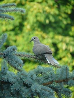 Dove, Bird, Branch, Green, Reflection, Room