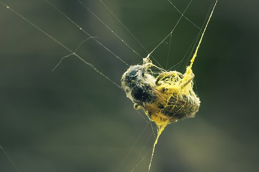 Caught, Web, Dusted, Cobweb, Close Up, Nature, Insect