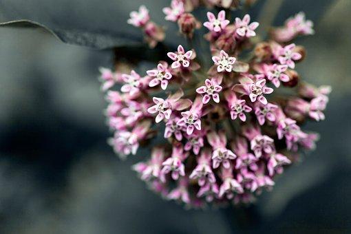 Flower, Spring, Nature, Plant, Garden, Decoration