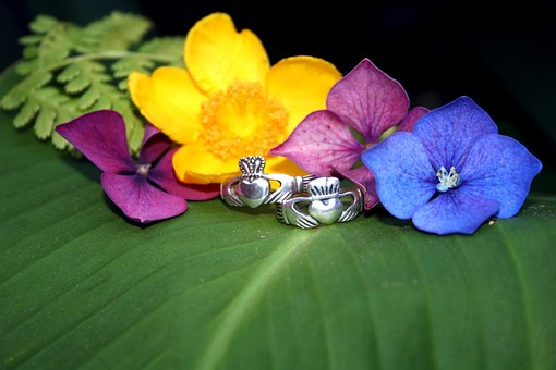 Claddagh Rings, Flowers, Nature, Love