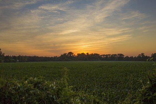 Sunset, Corn Field, Field, Nature, Landscape, Summer