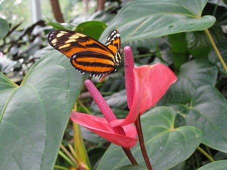 Orange, Butterfly, Pink, Flower, Seattle, Science
