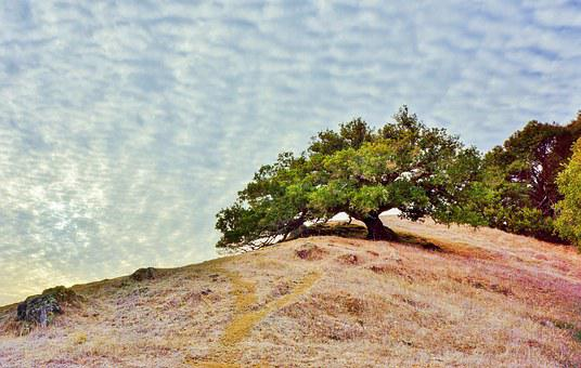 Marin County, California, Tamalpais Park, Sky, Clouds
