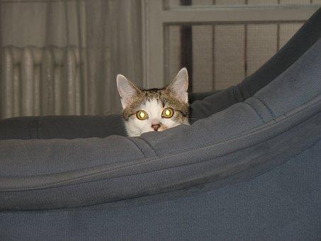 Cat, Armchair, Cache, Hidden, Hide, Look