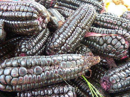 Corn, Black Maize, Food, Maize Variety, Cereals