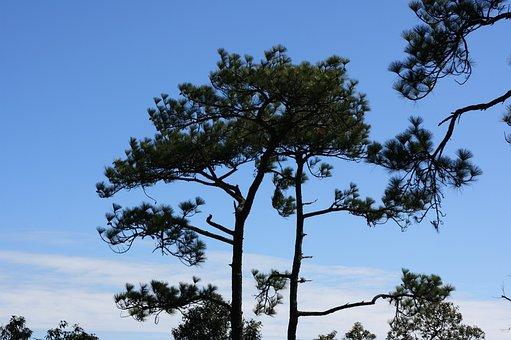 Kradueng, Cliff, Sky, Two Pine