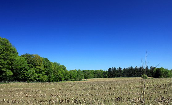 Corn Fields, Bronte Creek State Park, Canada, Ontario