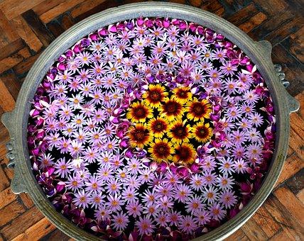 Flower, Rangoli, Celebration, Indian, Festival