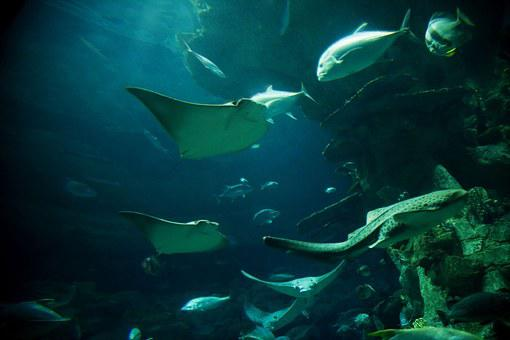 Fish Blanket, Bottom Sea, Fish