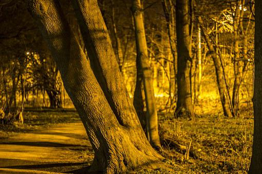 Forest Path, Night, Trees By Night