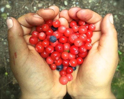 Huckleberry, Heart, Berries