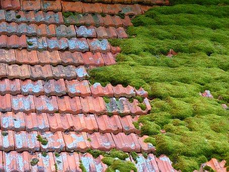 Hut, Roof, Moss, Bemoost Old, Barn