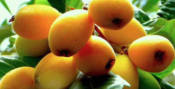 Loquats, Fruit, Sicily, Nature