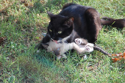 Cats, Mom Cat And Her Calf, Animal Tenderness, Animals