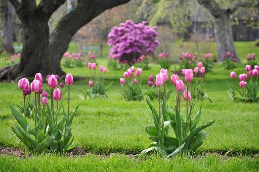 Tulips, Halifax, Public Gardens, Lake, Scenery, Park